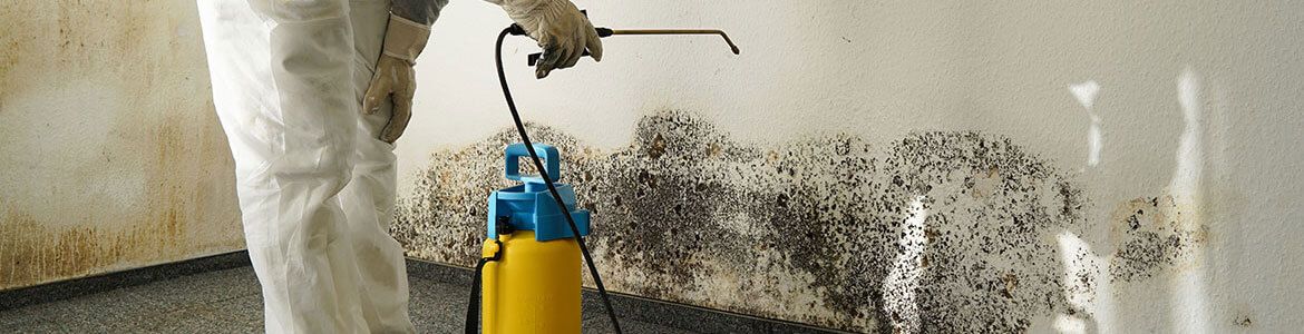 Humidity Prevention Company Mold Control Services In Massachusetts